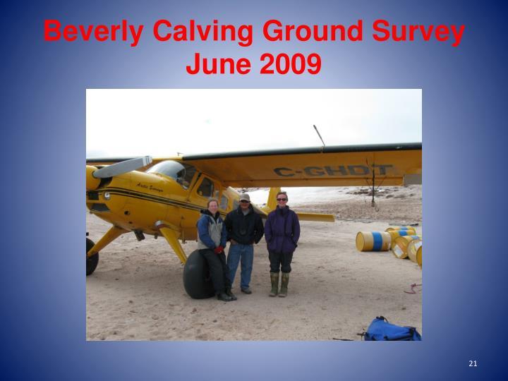 Beverly Calving Ground Survey