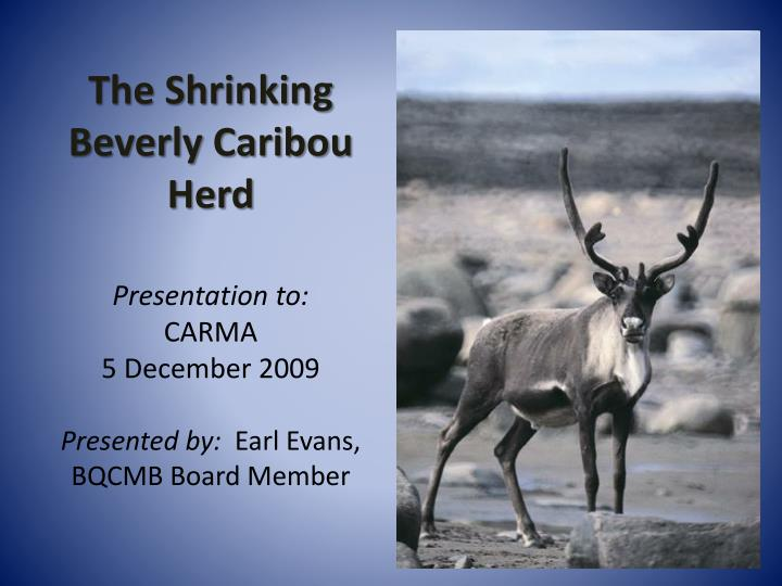 The Shrinking Beverly Caribou Herd
