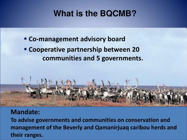 What is the BQCMB?