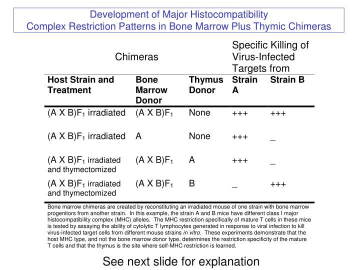 Development of Major Histocompatibility