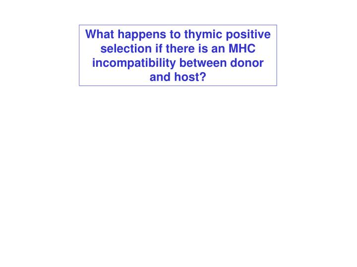 What happens to thymic positive selection if there is an MHC incompatibility between donor and host?