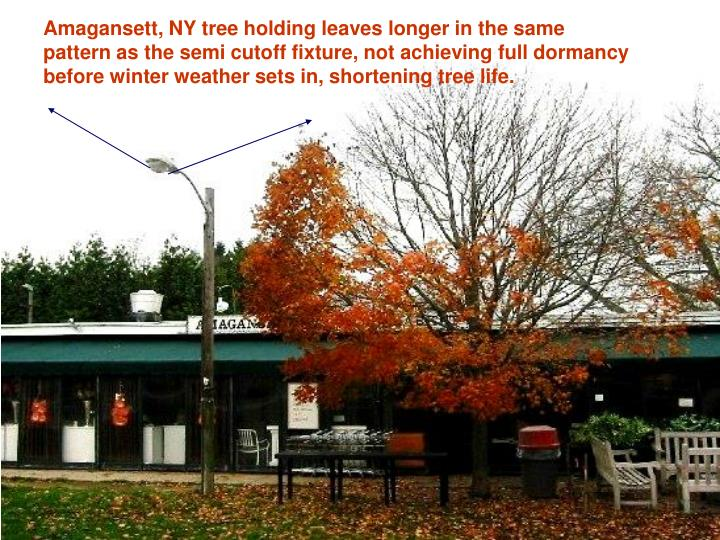 Amagansett, NY tree holding leaves longer in the same pattern as the semi cutoff fixture, not achieving full dormancy before winter weather sets in, shortening tree life.