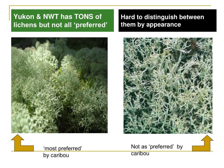 Yukon & NWT has TONS of lichens but not all 'preferred'