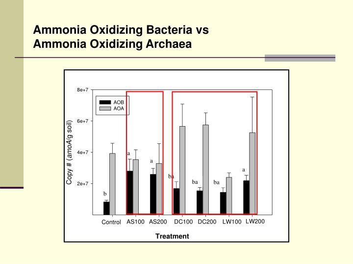 Ammonia Oxidizing Bacteria vs Ammonia Oxidizing Archaea