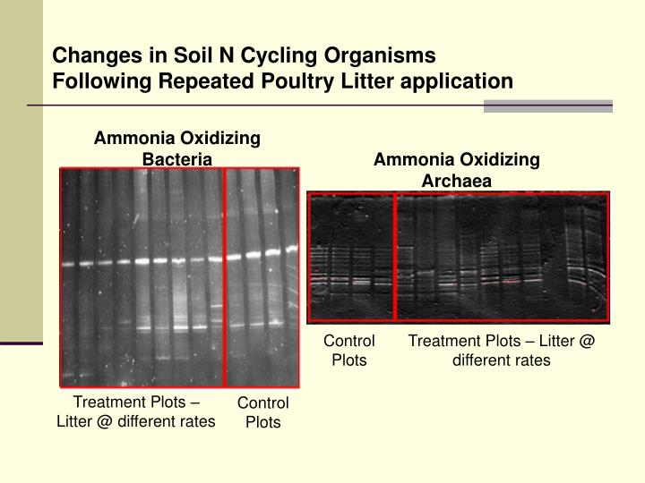 Changes in Soil N Cycling Organisms Following Repeated Poultry Litter application