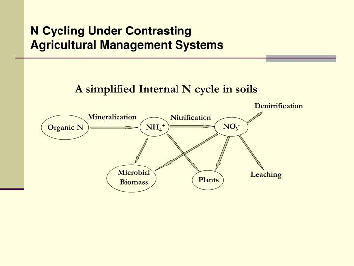 A simplified Internal N cycle in soils