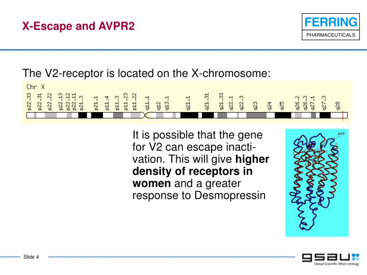 X-Escape and AVPR2
