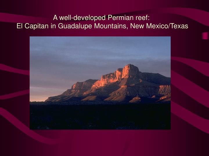 A well-developed Permian reef: