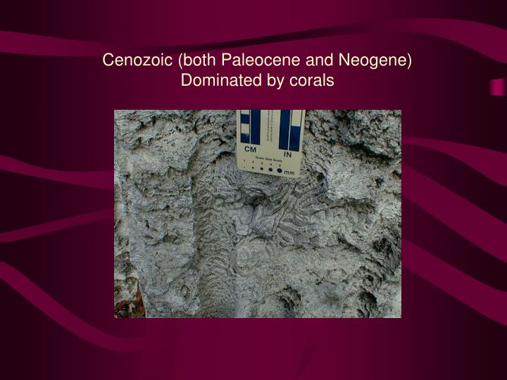 Cenozoic (both Paleocene and Neogene)
