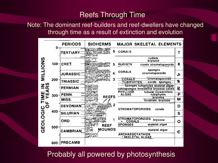 Reefs Through Time