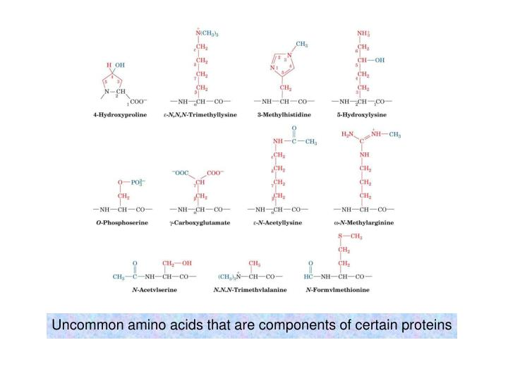 Uncommon amino acids that are components of certain proteins