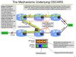 the mechanisms underlying oscars
