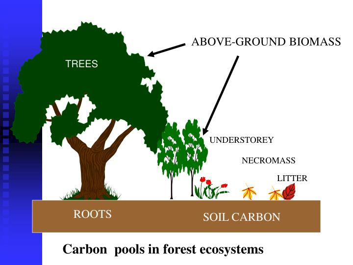 ABOVE-GROUND BIOMASS