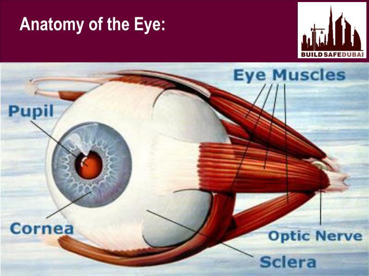Anatomy of the Eye: