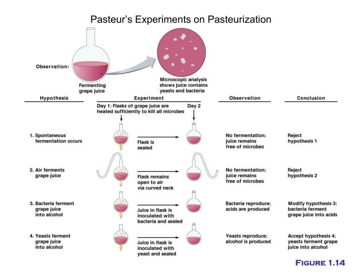 Pasteur's Experiments on Pasteurization