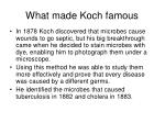 what made koch famous