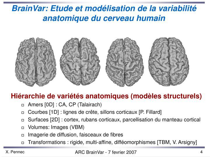 BrainVar: Etude et mod