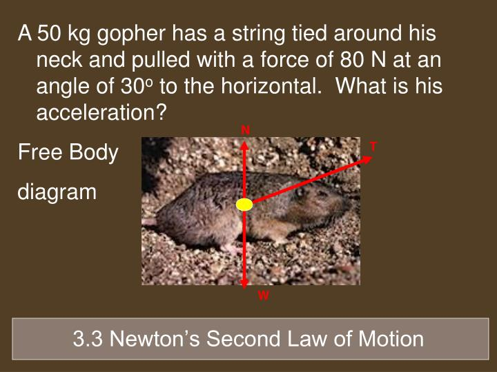 A 50 kg gopher has a string tied around his neck and pulled with a force of 80 N at an angle of 30