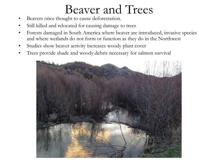 Beaver and Trees