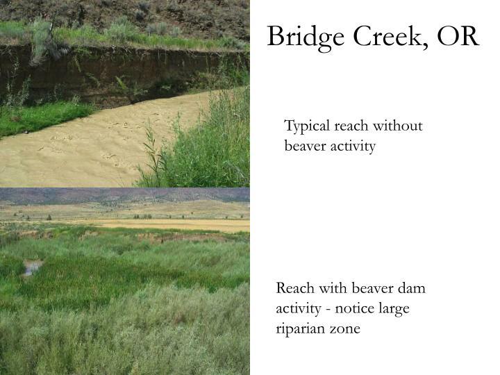 Bridge Creek, OR