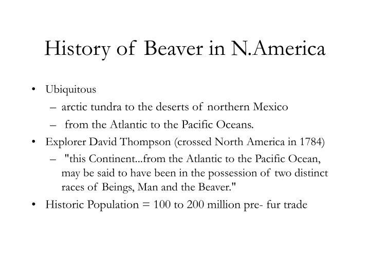 History of Beaver in N.America