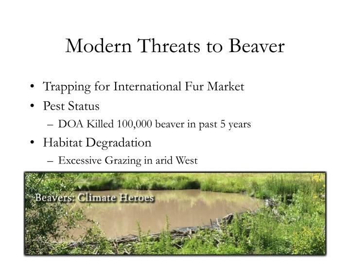 Modern Threats to Beaver