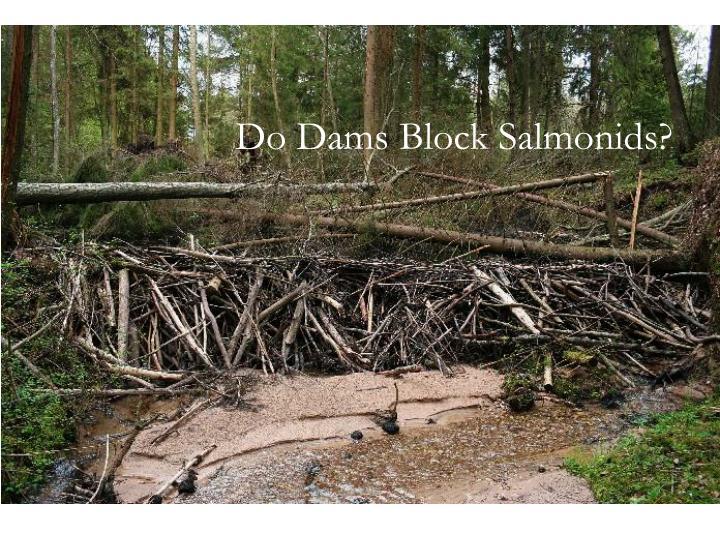 Do Dams Block Salmonids?