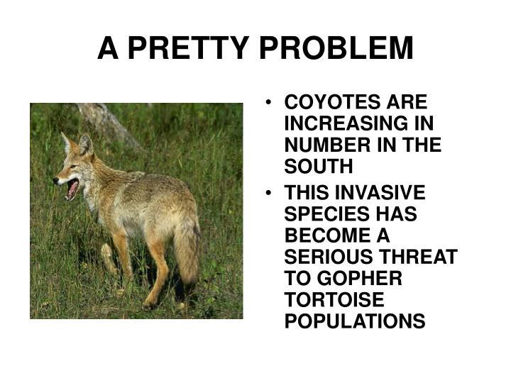 A PRETTY PROBLEM