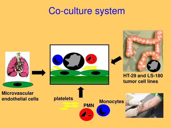 Co-culture system