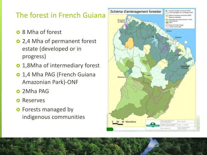 The forest in french guiana