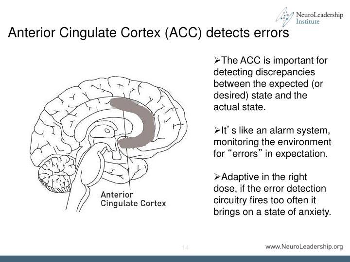 Anterior Cingulate Cortex (ACC) detects errors