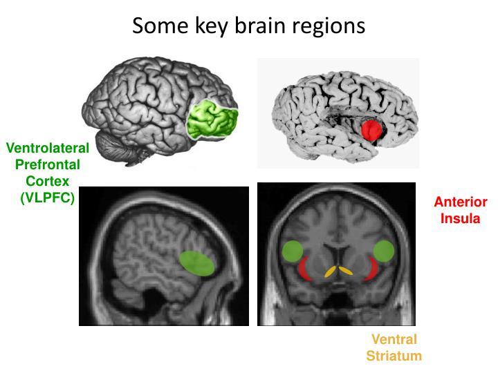 Some key brain regions