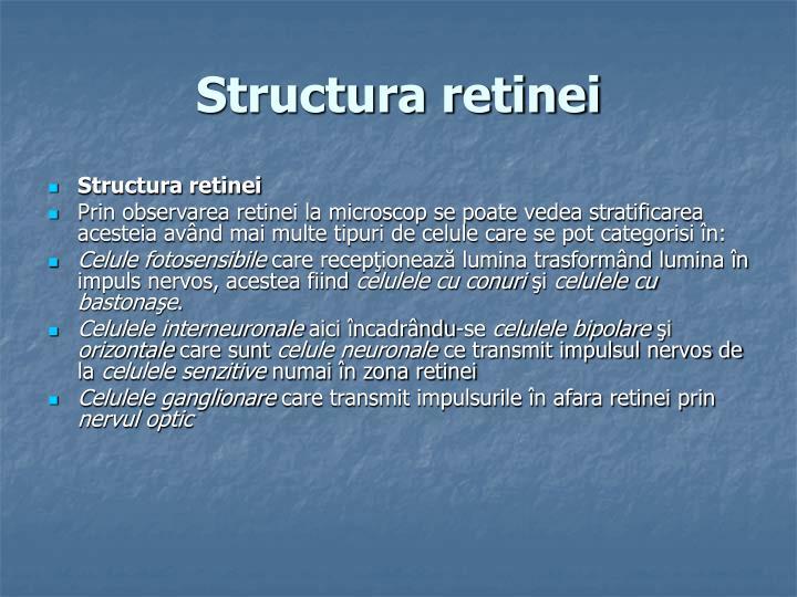 Structura retinei