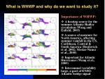 what is whwp and why do we want to study it