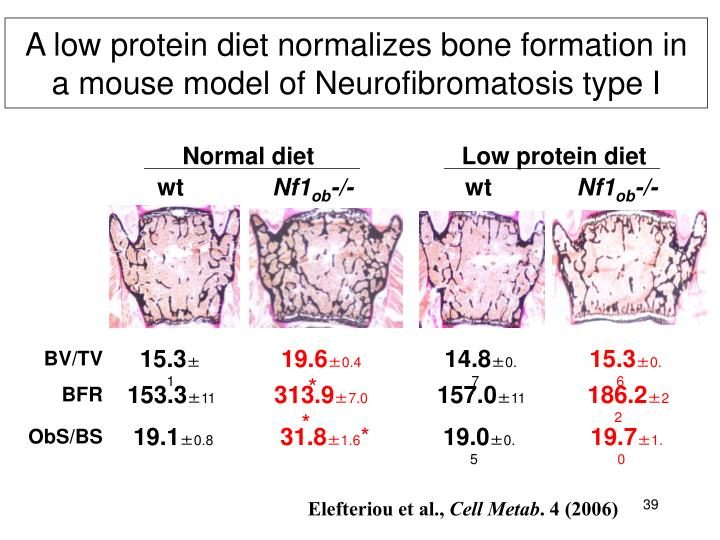 A low protein diet normalizes bone formation in