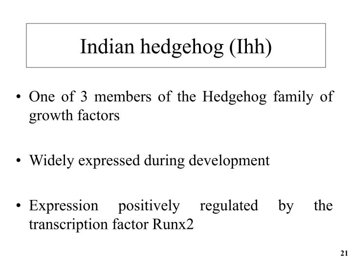 Indian hedgehog (Ihh)