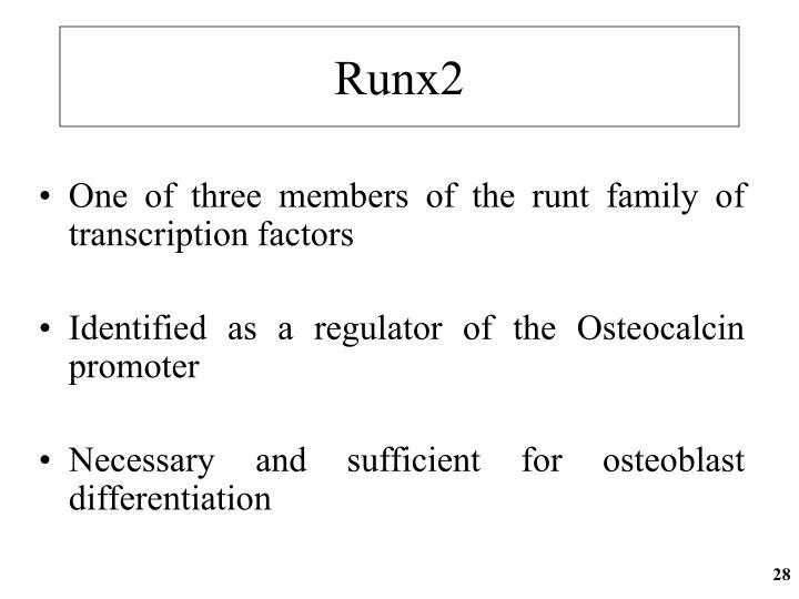 Runx2