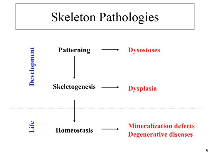 Skeleton Pathologies