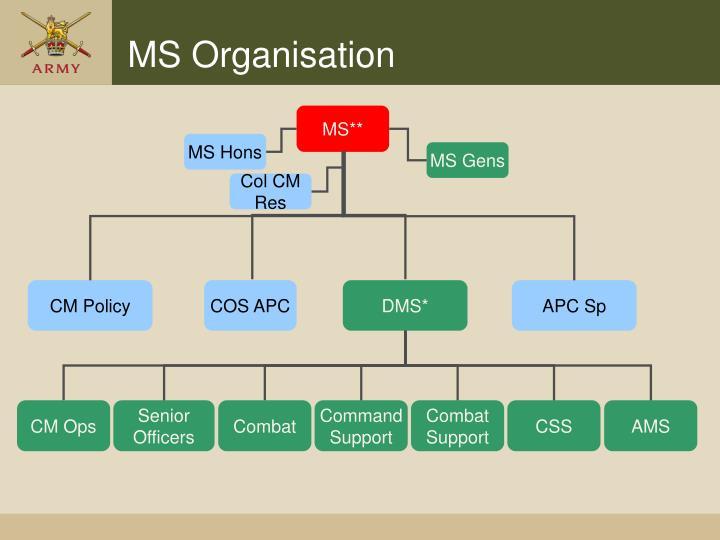 MS Organisation