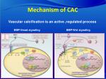 mechanism of cac