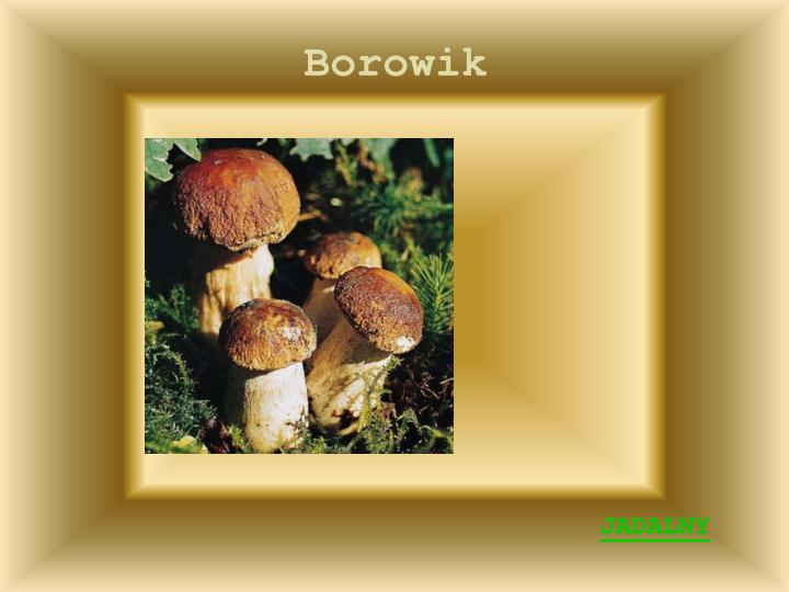 Borowik