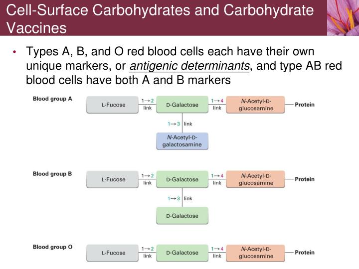 Cell-Surface Carbohydrates and Carbohydrate Vaccines