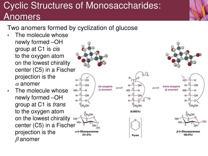 Cyclic Structures of Monosaccharides: Anomers