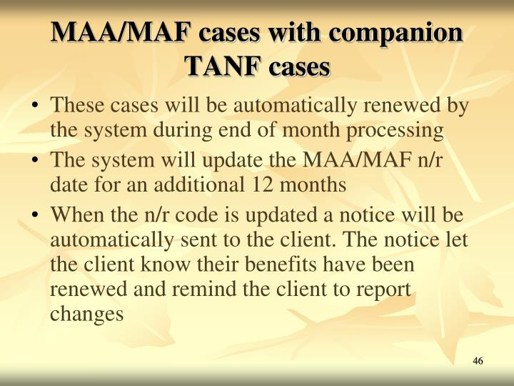 MAA/MAF cases with companion TANF cases
