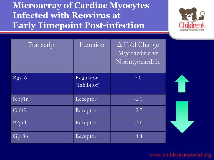 Microarray of Cardiac Myocytes