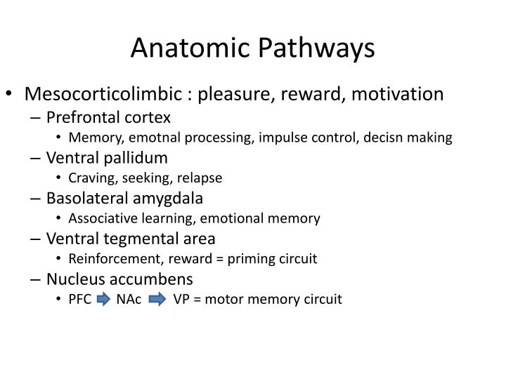 Anatomic Pathways