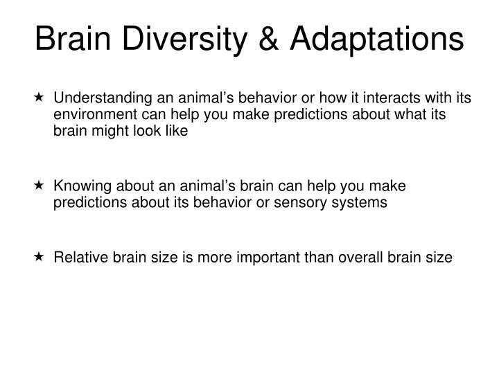 Understanding an animal