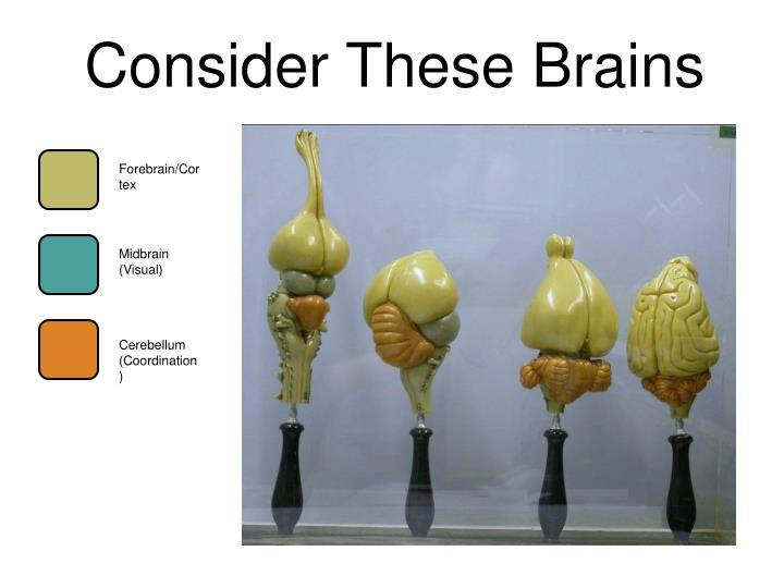 Consider These Brains