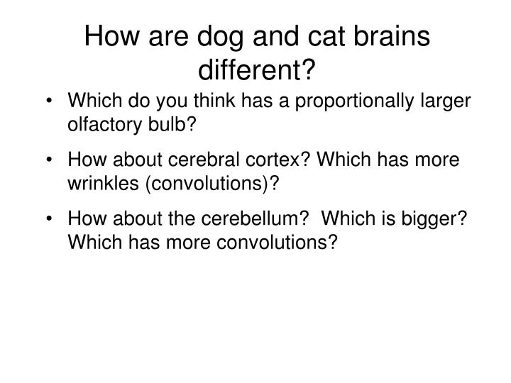 How are dog and cat brains different?