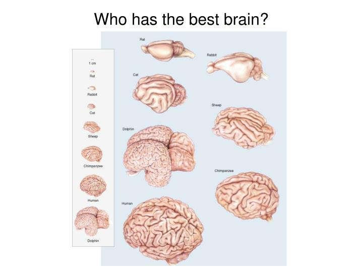 Who has the best brain?